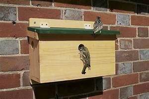 House Sparrow Terrace FSC Nest Box: NHBS