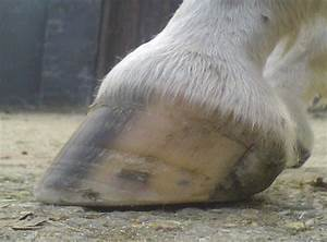 Barefoot Horse Blog  Hooves And Health