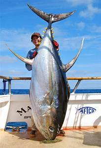 World Record largest Yellowfin Tuna ever caught by a woman ...