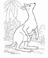 Coloring Kangaroo Pages Animals Wild Animal Printable Books Australian Realistic Drawing Kangaroos Babies Farm Honkingdonkey Sheet Clipart Clip Tree Easy sketch template