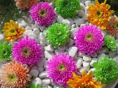 fonds decran fleurs multicolores