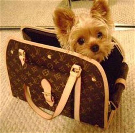 designer handbags reviews replica louis vuitton dog carriers   accessories