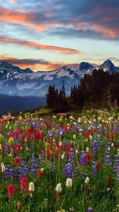 mount rainier national park wallpaper  desktop