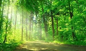 Wie uns die Natur glücklich und gesund macht