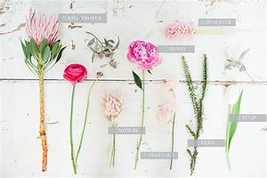 Spring And Summer Flower Guide