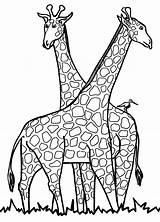 Outline Head Animal Giraffe Coloring Cartoon Clipart Clipartmag Giraff sketch template
