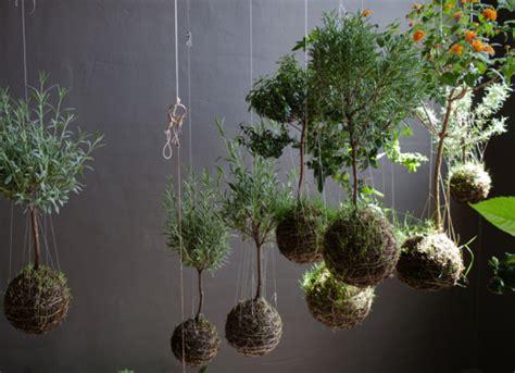 string garden plants kokedama clydeoak