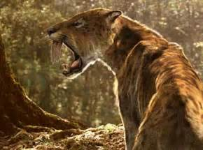 sabertooth cat saber toothed cats wrestled prey with powerful arms