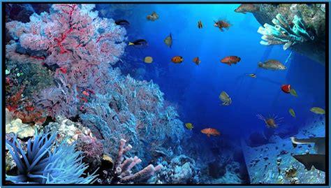 aquareal 3d sea aquarium screensaver free
