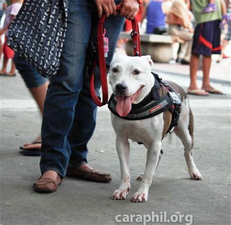 welfare philippines blog archive animal welfare week