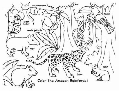 Coloring Rainforest Animals Pages Animal Tropical Endangered