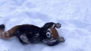 sequoia park zoo News and Photos   Perez Hilton