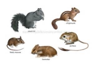 What are Marsupials Insectivores and Rodents? partymammals