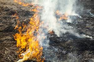 Burning, Grass, To, Remove, Thatch