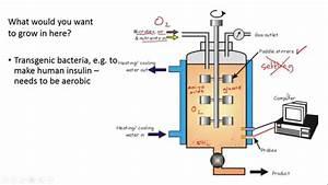 Fermenters And Yoghurt Making For Igcse Biology