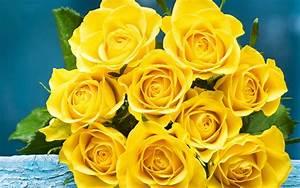 Gelbe Rose Bedeutung : gelbe blumen und ihre bedeutung blog floraqueen deutschland ~ Whattoseeinmadrid.com Haus und Dekorationen
