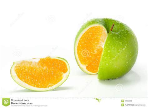orange hybrid fruit apple orange hybrid royalty free stock images image 18058839