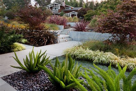 modern dry garden sue oda landscape architecture