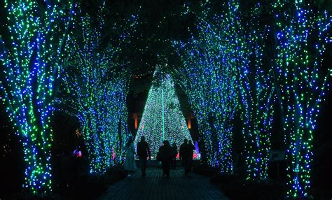 the atlanta botanical garden garden light up the garden