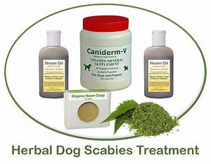 scabies treatment for dogs