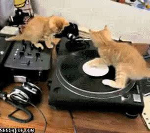 cat dj gif  cheezburger find share  giphy