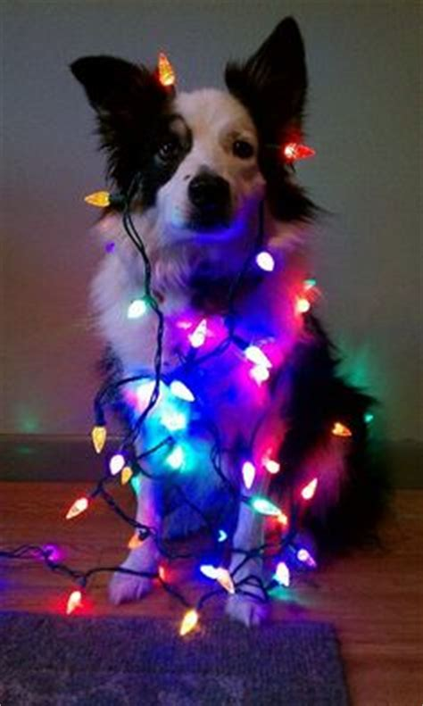wrapped up for christmas on pinterest christmas lights