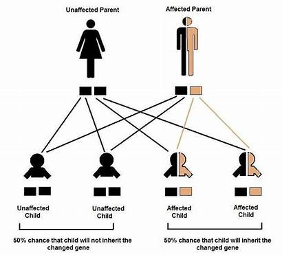 Dominant Autosomal Genetic Disorder Genes Neurofibromatosis Pattern