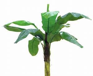 Pflanze Mit Fleischigen Blättern : bananenbaum deko pflanze mit 9 bl ttern h he ca 220cm g nstig kaufen ~ Buech-reservation.com Haus und Dekorationen