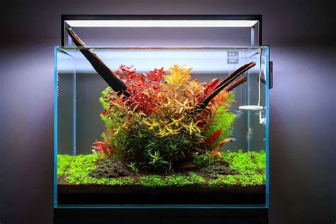 How To Aquascape An Aquarium by Aquascaping For Beginners 10 Helpful Tips