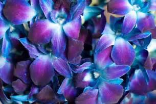 Wholesale Flower Bouquets