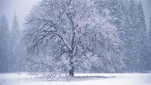 Download Snow Falling Wallpaper 1920x1080 | Wallpoper #449912