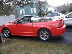 02 Mustang GT - Ford Forum - Enthusiast Forums for Ford Owners