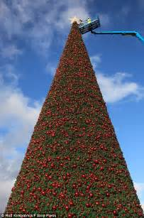 britain s largest christmas tree goes up in cheshire daily mail online
