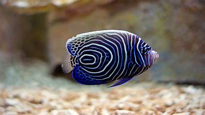 Fish Sea Wallpapers 1080p Definition