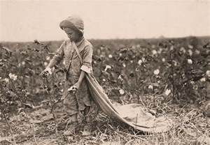 Child Labor Working in Cotton Fields