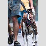 Dog Attacks On Humans | 180 x 277 jpeg 14kB