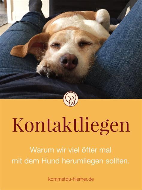 Glueckliche Haustiere Was Hunde Brauchen by Kontaktliegen Hundeblog Kommst Du Hierher Hunde Hunde