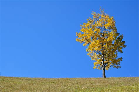 how to land scape file autumn landscape the golden season jpg wikimedia commons