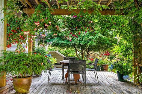 best pergola plants pergola design ideas best pergola plants house design ideas