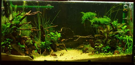 concours photos floraquatic aquascape