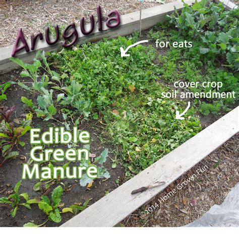 using edible cover crops and green manures in the home