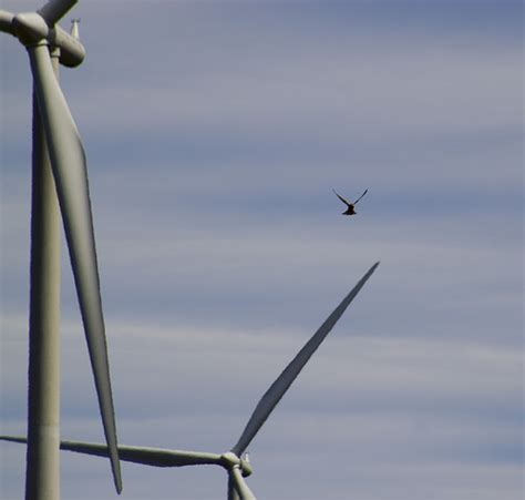 Will Painting Wind Turbine Blades Minimise Bird Collisions
