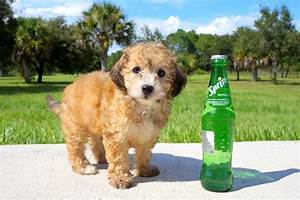 TOP 5 Cutest and Rarest Mixed Dog Breeds | Animal Bliss