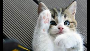 Funny Cats and ... Cute Cats