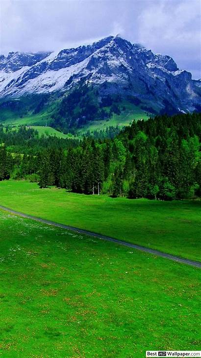 Greenery Nature Background Iphone Peaceful Wallpapers Mobile