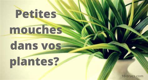 moucheron dans la cuisine mouchettes dans les plantes quoi faire 10 trucs