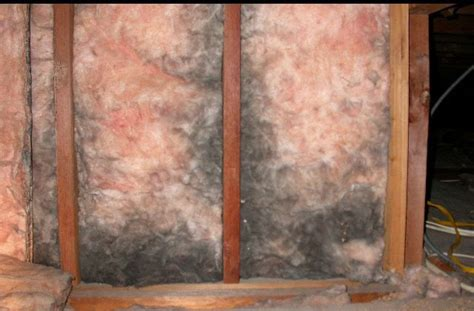 mold   insulation