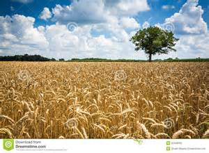 Landscapes Photography Wheat Fields