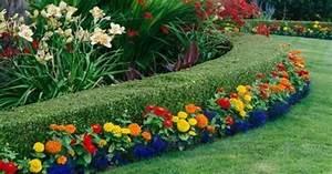 Quels Arbustes Pour Une Haie : une haie de jardin fleurie quels arbustes quels fleurs ~ Premium-room.com Idées de Décoration