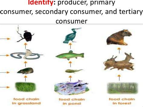 consumer secondary tertiary producer identify energy